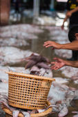 Fishermen throw fish into the basket — Stock fotografie