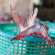 Tail fish — Stock Photo