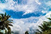 Hindistan cevizi avuç içi mavi gökyüzü — Stok fotoğraf