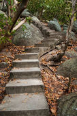 Old stairs and surrounding vegetation — Stock Photo