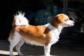 The dog sitting — ストック写真