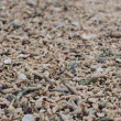 Coral fragments on beaches — Stock Photo #39013727