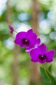 Beautiful purple orchid. — Stock Photo