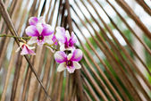 Purple tropical orchid flower — Stock Photo
