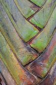 Consistenza della corteccia d'albero — Foto Stock