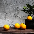 Oranges and Plants in back plastic pots — Stock Photo #42536287