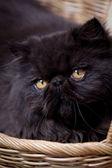 Krásné kotě v koši — Stock fotografie