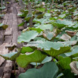 Old wooden foot bridge over the pond of lotus — Stock Photo #47841113