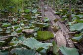 Old wooden foot bridge over the pond of lotus — Stock fotografie