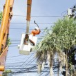 Electrician worker in cherry picker solve palm leaf and protect — Stock Photo