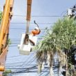 Stock Photo: Electriciworker in cherry picker solve palm leaf and protect