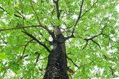 Orman ağaçları. doğa yeşil ahşap güneş ışığı arka. — Stok fotoğraf