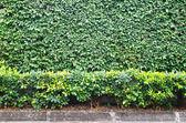 Plant background — Stock Photo