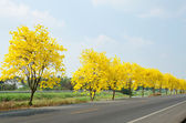 Country road with yellow flowers — Stockfoto