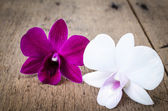 Pink and white orchid (Phalaenopsis ) — Stock Photo