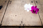 Pink and white orchid (Phalaenopsis ) — ストック写真