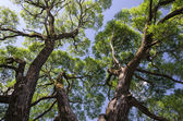 Krásné stromy — Stock fotografie