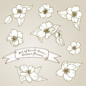 Set of hand drawn apple flowers. — ストックベクタ