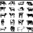 Stock Vector: Cattle Set