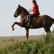 Woman on a horse — Stock Photo #27858757