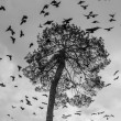 A flock of crows circling high above the krone of pine — Stock Photo