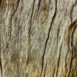 Old wood texture. — Stock Photo