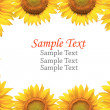 Sunflower isolated with sample text. — Stock Photo
