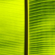 Fresh green banana leaf. — Stock Photo