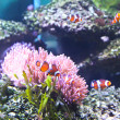 Stock Photo: Coral Reef and Tropical Fish in aquarium.
