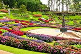 Mae fah luang bahçe, doi üzerinde bulun tung, tayland — Stok fotoğraf