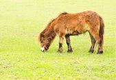 âne dans un champ — Photo