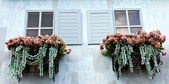 Window and flower box — Stock Photo