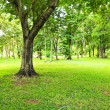 Stock Photo: Green trees in park