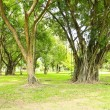 Green trees in park — Stock Photo