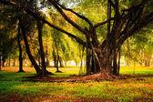 Sun rays in autumn forest. — Stock Photo