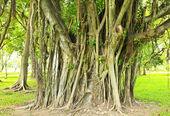 在公园的绿树 — 图库照片