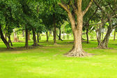 Green trees in park — Stok fotoğraf