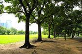 Parco città verde mattino — Foto Stock