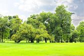 Parco verde della città — Foto Stock