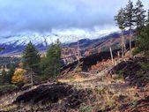 Etna volcano, lava, mountain, forest, landscape, danger,cloud. — Stock Photo