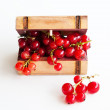 Red Currant in the chest — Stock Photo