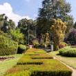 Royal Botanical Gardens, Peradeniya — Stock Photo #28655457