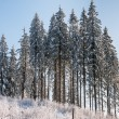 Trees in winter — Stock Photo #29059885