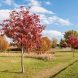 Rowan tree in autumn — Stock Photo