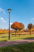 Herfst in een park — Stockfoto