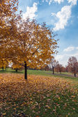 Autumn trees in a park — Foto Stock