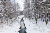 Brook in snowy forest — Stock Photo