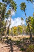 Floresta das montanhas beskid na Polónia — Fotografia Stock