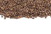 Coffee beans stripe — Stock Photo