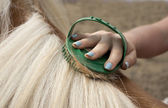 Horse grooming — Stock Photo